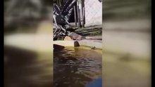 Ördek su aygırlarının havuzuna düştü