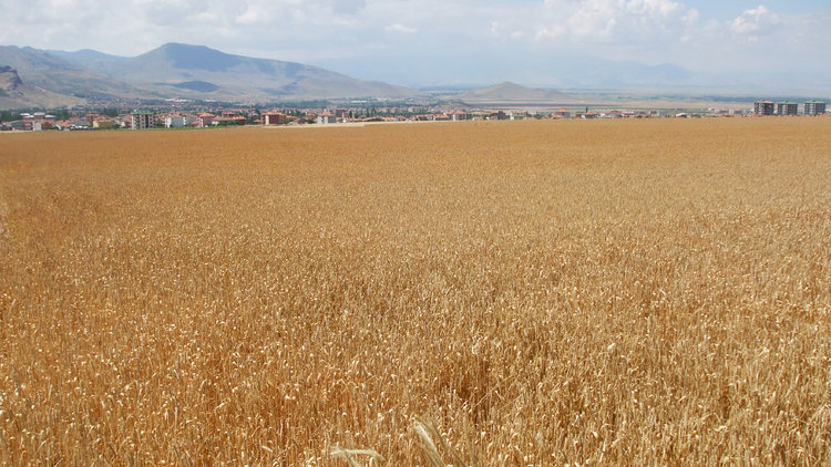 Tarım arazileri hızla azalıyor