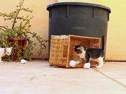 Yavru kedilerin oyunu!