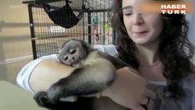 Şempanze'nin sevinci