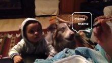 Köpek mama istiyor