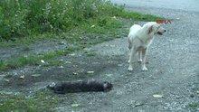 Sokak köpeğinin yürek burkan görüntüleri