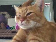 Sahibini kıskanan kedi