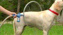 Köpek yıkama tekniği
