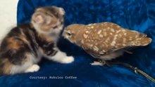 Baykuş ile kedinin dostluğu