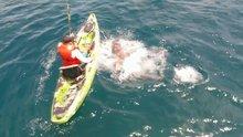 Köpek balığı yakalayan balıkçının zor anları
