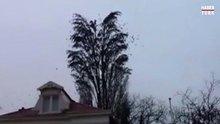 Bir ağaca en fazla kaç kuş konabilir