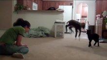 Zıplama çalışmaları yapan sevimli kuzu