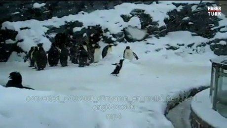 Dünya'nın en mutlu pengueni