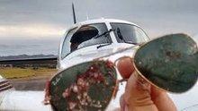 Uçağa akbaba çarptı
