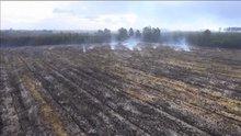 Orman yangınları paniğe yol açıyor