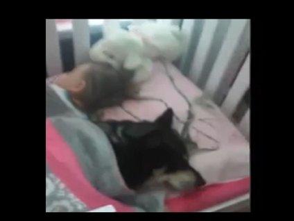 Küçük kız ve köpeğinin sevimli halleri