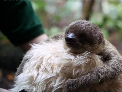 Tembel hayvana peluş anne