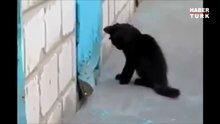 Köpeği sıkıştığı yerden kurtaran kedi