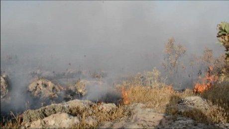 Güneydoğu'da orman yangınları