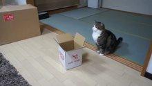 Kedilerin kutu merakı