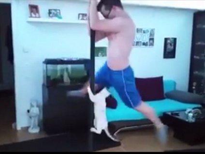 Sahibiyle birlikte direk dansı yapan kedi