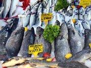 Av yasağı kalkıyor, balık sezonu açılıyor