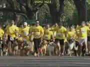 Arjantin'de köpekler yarıştı