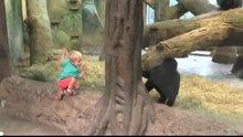 Çocukla yavru gorilin oyunu