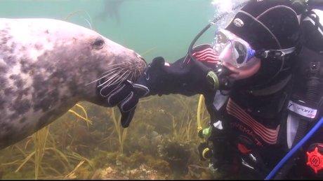 Göbeğinden sevdiren fok balığı