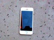 Karıncaların Iphone'na verdiği tepki