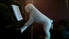 Evde tek başına kalınca piyano çaldı