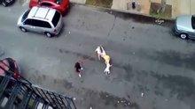 İki pitbull adama saldırdı