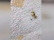Karınca iki arıyla ekmek kavgasına girişti