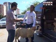 Adana'da kurbana VIP servis