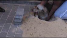 Kaldırımın altından köpek çıktı!