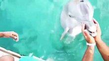 Denize düşen cep telefonunu yunus kurtarı