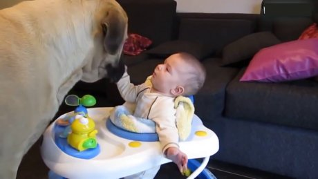 Bebeklerle evcil hayvanların oyunu