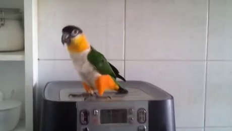 Papağandan müthiş gösteri