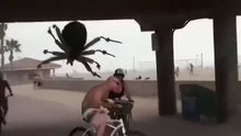 Dev örümcekle korkutan şaka