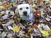Bu köpek yaprakları çok seviyor