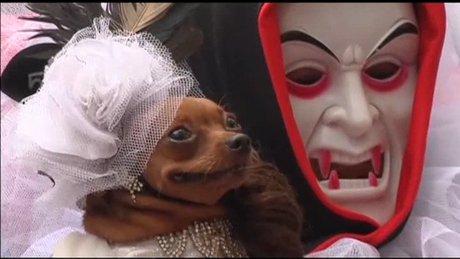 Köpeklerin Cadılar Bayramı