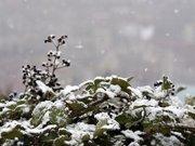 Gümüşhane il merkezine yılın ilk karı yağdı