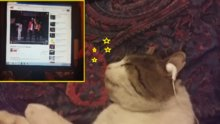 Müzik aşığı kedi