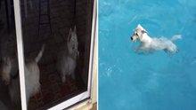 Havuz için çıldırdı