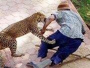 Hayvanlardan beklenmedik saldırılar