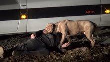 Pitbull, baygınlık geçiren sahibini böyle korudu