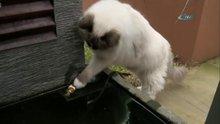 Kedi balığı kurtardı