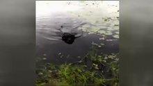 Suda can çekişen kuşu kurtaran kahraman köpek