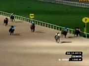 SPOR Hipodromda feci kaza: At düştü ayağı kırıldı