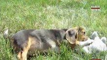 Dünya'nın ilk tüp köpekleri
