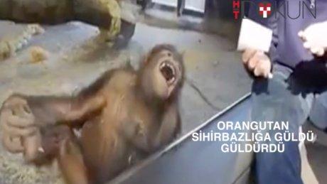 Orangutan güldü, güldürdü
