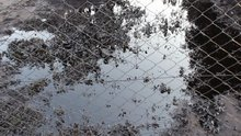 Narenciye bahçesini sel değil petrol bastı