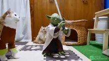 Kedilerin Yoda ile imtihanı