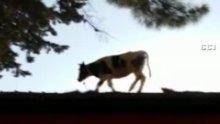 Kesileceğini anladı, çatıya çıktı